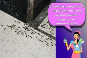 Как избавиться и вывести муравьев в доме и квартире, средства для борьбы, чем травить