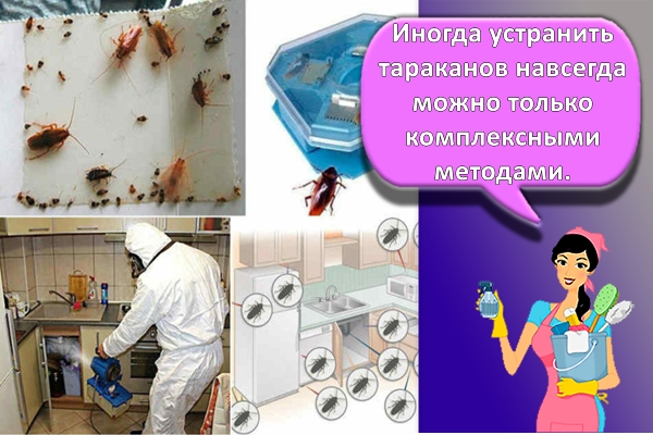 профилактика тараканов
