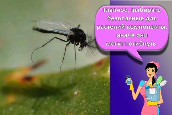 насекомые на растении