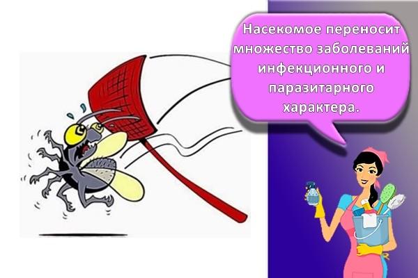 борьба с мухой