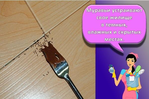 способ избавления от муравьев