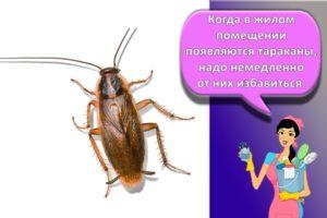 Как быстро избавиться от тараканов, самые эффективные средства для выведения