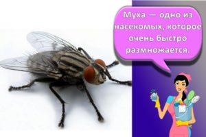 Как можно избавиться от мух, средства, отпугиватели и ловушки своими руками