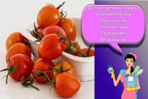 Как хранить помидоры в домашних условиях, правила, длительность и способы