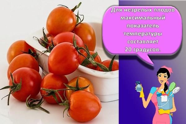 помидоры в контейнере