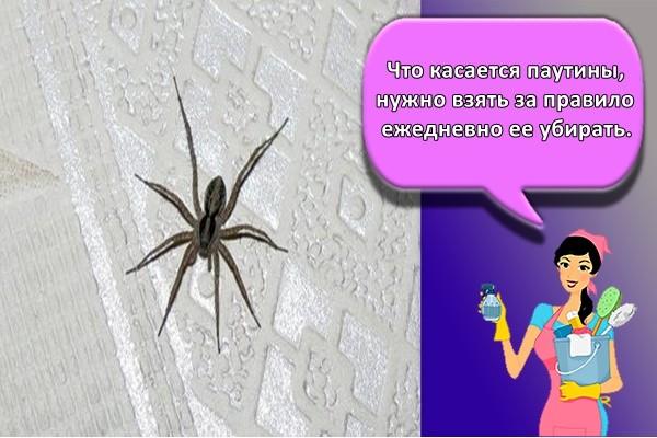 Что касается паутины, нужно взять за правило ежедневно ее убирать.