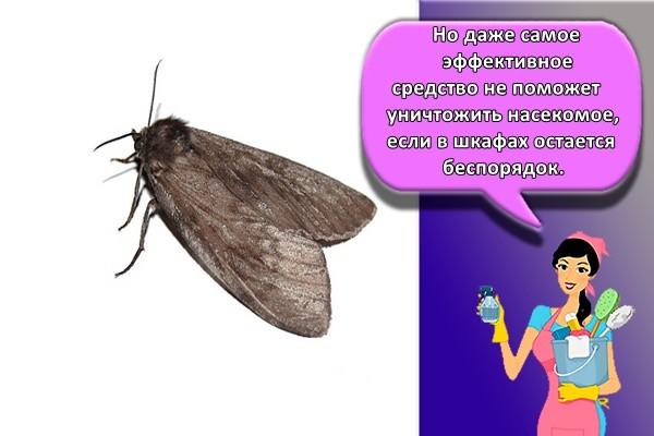 Но даже самое эффективное средство не поможет уничтожить насекомое, если в шкафах остается беспорядок,