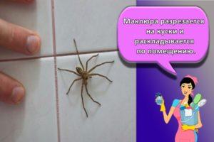 Как навсегда избавиться от пауков в квартире и частном доме