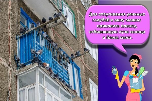 Для отпугивания уличных голубей к окну можно приклеить пленку, отбивающую лучи солнца и блеск снега.