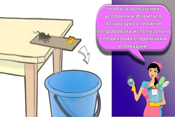 ловушка для мышей из ведра и картонки