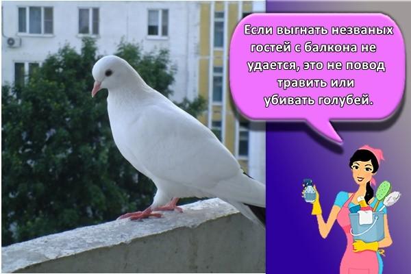 Если выгнать незваных гостей с балкона не удается, это не повод травить или убивать голубей.