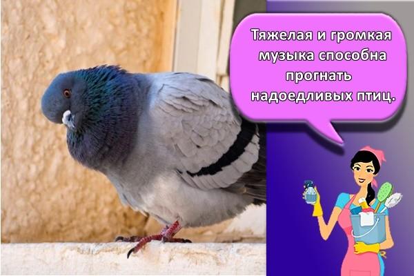 Тяжелая и громкая музыка способна прогнать надоедливых птиц