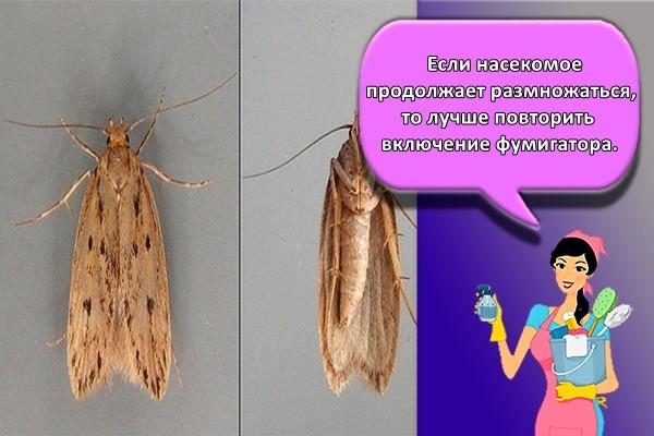 Если насекомое продолжает размножаться, то лучше повторить включение фумигатора.