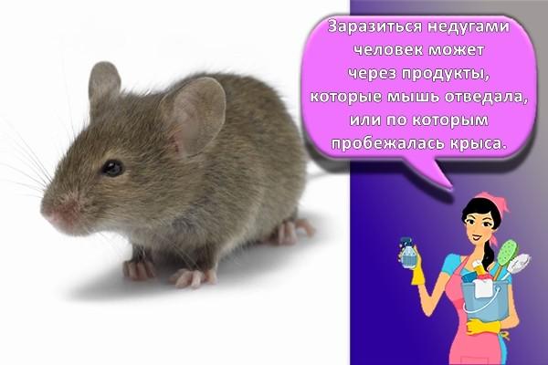 Борьба с мышами в домашних условиях