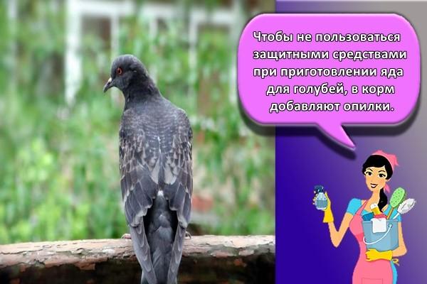 Чтобы не пользоваться защитными средствами при приготовлении яда для голубей, в корм добавляют опилки