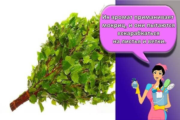 Их аромат приманивает мокриц, и они пытаются вскарабкаться на листья и ветки.