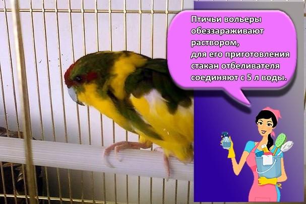 птичие клетки