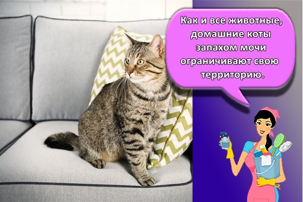 Как и все животные, домашние коты запахом мочи ограничивают свою территорию.