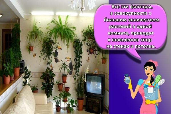 Все эти факторы, в совокупности с большим количеством растений в одной комнате, приводят к появлению спор на стенах и потолке.