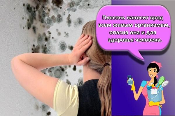 Плесень наносит вред всем живым организмам, опасна она и для здоровья человека,