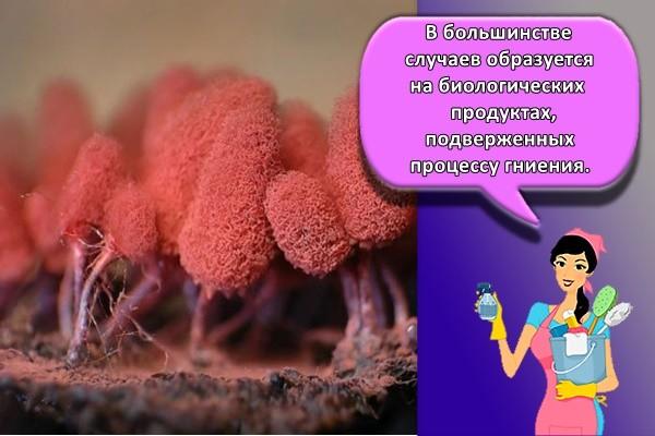 В большинстве случаев образуется на биологических продуктах, подверженных процессу гниения.