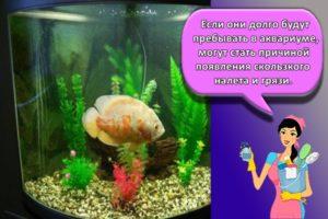 Пошаговое руководство, как почистить аквариум в домашних условиях