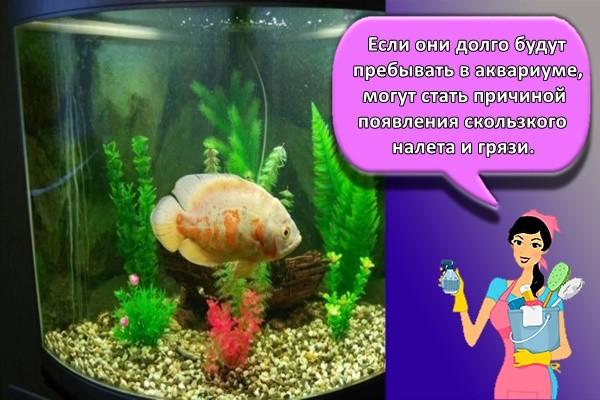 Если они долго будут пребывать в аквариуме, могут стать причиной появления скользкого налета и грязи.