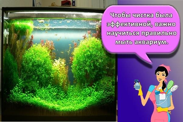 Чтобы чистка была эффективной, важно научиться правильно мыть аквариум.