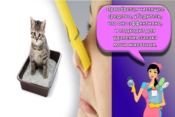 Приобретая чистящее средство, убедитесь, что оно эффективно, и подходит для удаления запаха мочи животных.