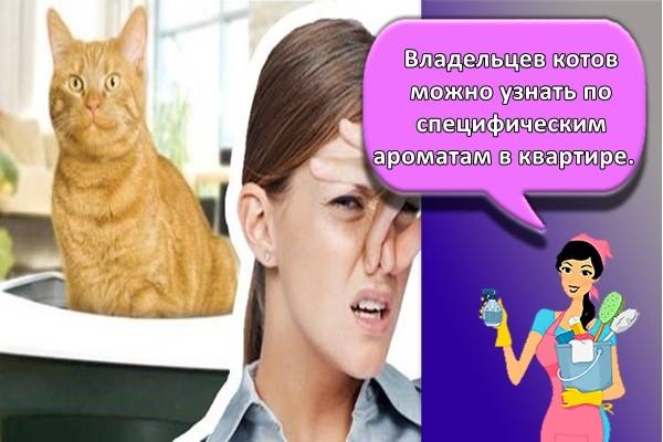 Владельцев котов можно узнать по специфическим ароматам в квартире.