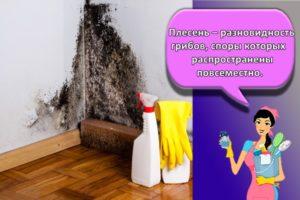 17 лучших средств от грибка и плесени на стенах с описанием
