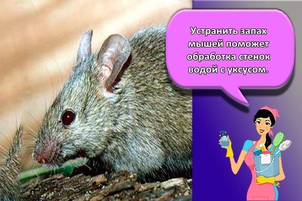 запах мышей