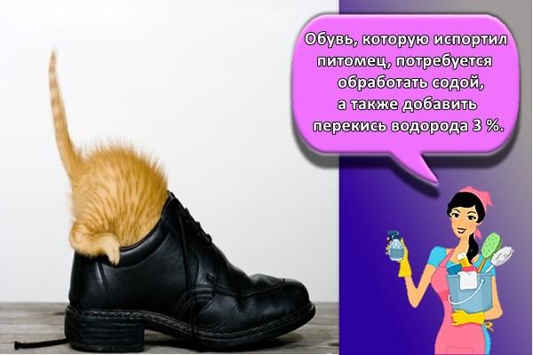Обувь, которую испортил питомец, потребуется обработать содой, а также добавить перекись водорода 3 %.