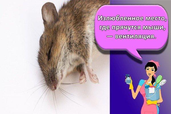 Излюбленное место, где прячутся мыши, — вентиляция.