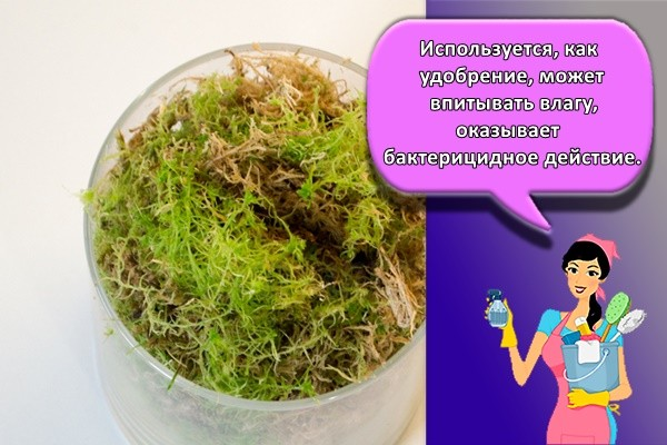 Используется, как удобрение, может впитывать влагу, оказывает бактерицидное действие.