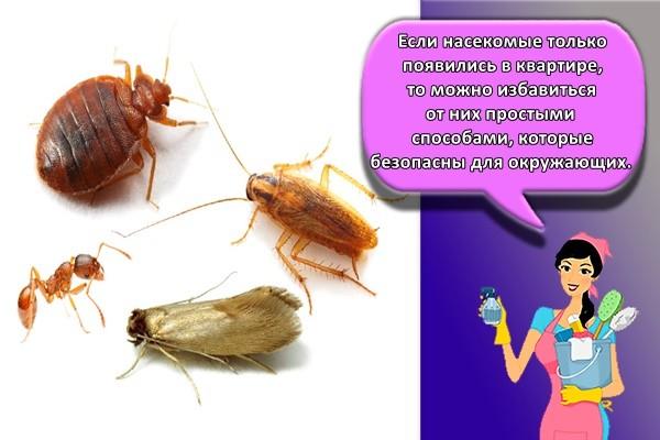 Если насекомые только появились в квартире, то можно избавиться от них простыми способами, которые безопасны для окружающих.