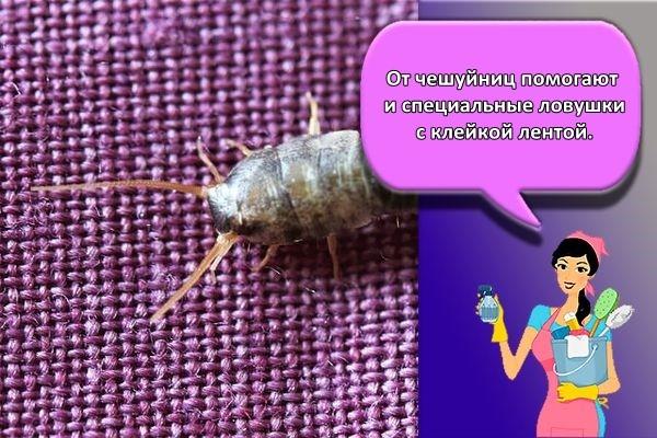 ловушки от чешуйниц