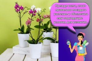 Пошаговая инструкция по уходу за орхидеями в домашних условиях