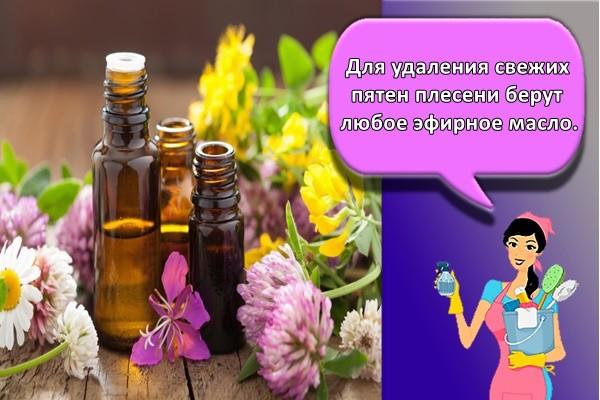 Для удаления свежих пятен плесени берут любое эфирное масло