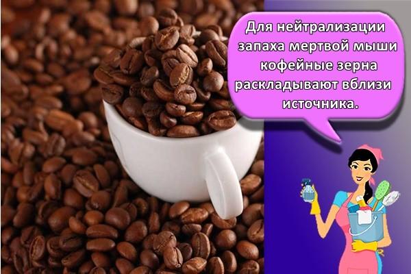 Для нейтрализации запаха мертвой мыши кофейные зерна раскладывают вблизи источника
