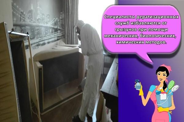 Специалисты дератизационных служб избавляются от грызунов при помощи механических, биологических, химических методов.