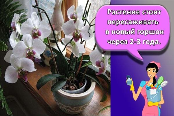 Растение стоит пересаживать в новый горшок через 2-3 года.