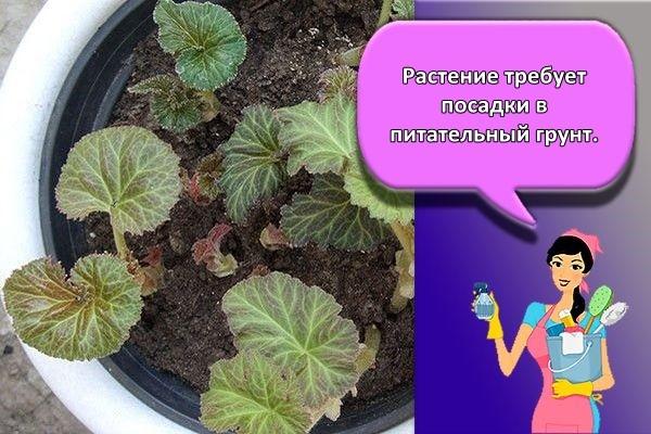 растение и уход