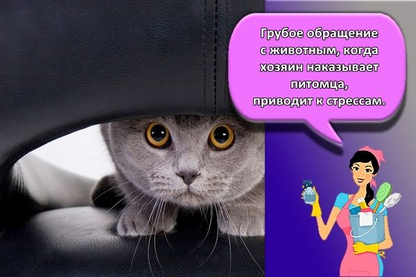 кот перепуган