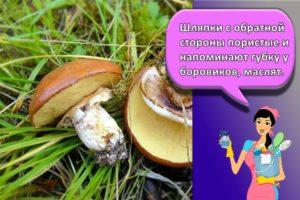 Сколько можно хранить замороженные грибы в домашних условиях в морозилке