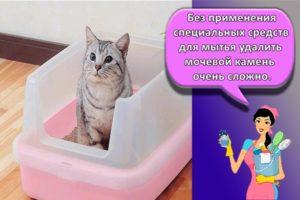 Чем можно отмыть кошачий лоток от мочевого камня, чтобы не было запаха