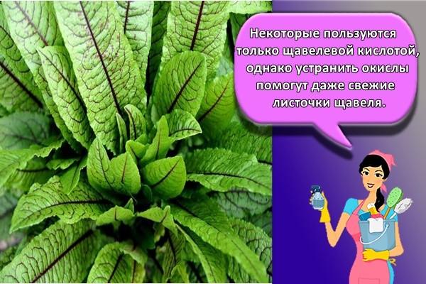 Некоторые пользуются только щавелевой кислотой, однако устранить окислы помогут даже свежие листочки щавеля.