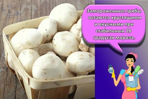 Замороженные грибы остаются хрустящими и вкусными при стабильных 18 градусах мороза.