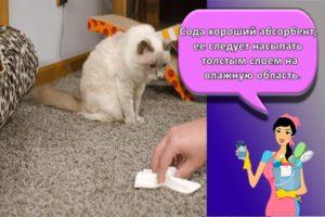 20 лучших методов, как с одежды и мебели отстирать кошачью мочу