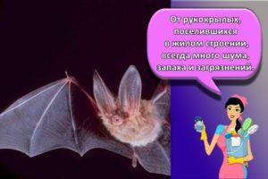 Правила и 15 лучших методов, как навсегда избавиться от летучих мышей